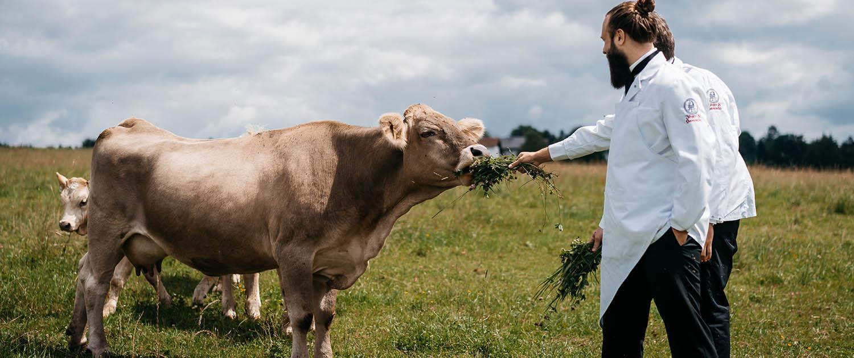 bestes Fleisch vom BIO Rind aus Weidehaltung