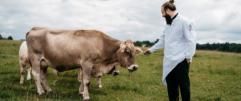 BIO Rindfleisch aus Weidehaltung